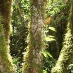 Acaime-Trip - Reiseberichte zu Kolumbien - Schlingpflanzen